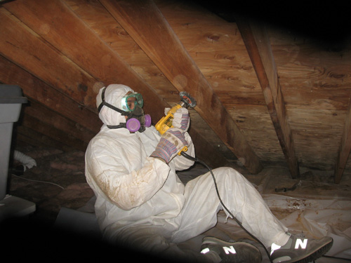 Los Angeles Mold Testing Experts